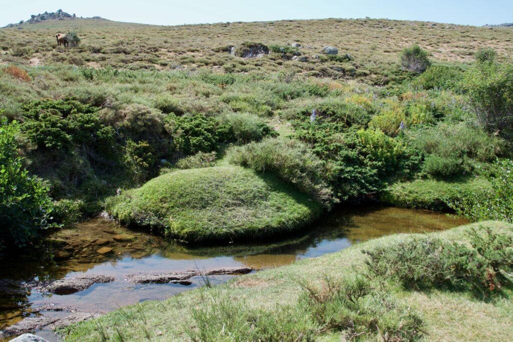 Plateau du Cuscionu, Corsica